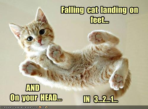 Fearless Cat Landing on Feet