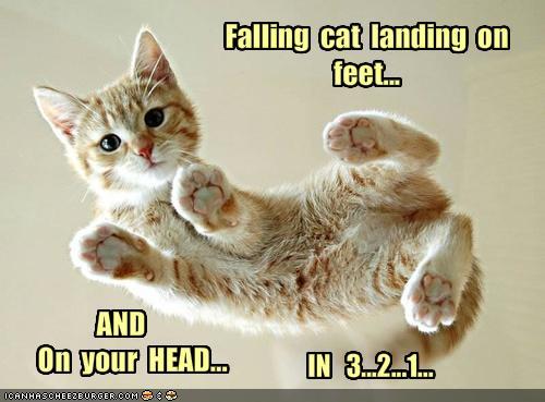 Fearless Cat Landing on Feet
