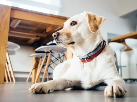 How These 13 Tech Companies Structured Their Dog Policy by TINYpulse