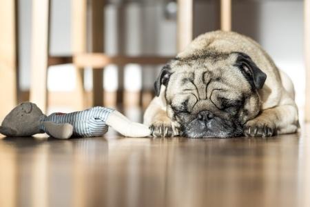 How a Lack of Sleep Kills Productivity by TINYpulse