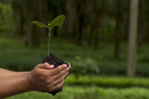 7 Ways Millennials Want Their Employers to Celebrate Earth Day